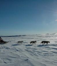 Røros et chiens de traineaux