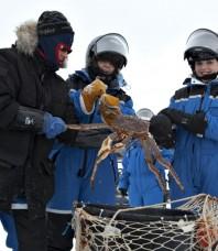 Pêche aux crabes géants